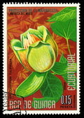 EQUATORIAL GUINEA - CIRCA 1974: A stamp printed in Equatorial Guinea shows Liriodendron Tulipifera, series is devoted to flowers, circa 1974 — Stock Photo