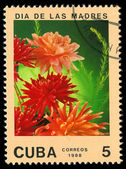 CUBA - CIRCA 1988: A post stamp printed in Cuba divided to Mother's Day and shows flowers , circa 1988 — Stock Photo