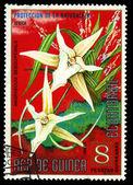 Equatoriaal-guinea - circa 1974: een stempel gedrukt in Equatoriaal-guinea toont angraecum sesquipedale of Kerstmis orchidee, reeks is gewijd aan bloemen, circa 1974 — Stockfoto