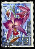 Rovníková guinea - asi 1974: razítka v rovníkové guineji ukazuje laelia gouldiana, série je věnována květin, asi 1974 — Stock fotografie