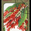 CUBA - CIRCA 1984: post stamp printed in Cuba shows image of triplaris surinamensis from Caribbean flowers series, Scott catalog 2689 A730 5c, circa 1984 — Stock Photo