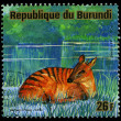 "REPUBLIC OF BURUNDI - CIRCA 1976: a postage stamp shows image of the animals of savanna, ""cephalophus zebra"", circa 1976 — Stock Photo #29359423"