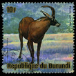 BURUNDI - CIRC1964: Stamp printed in BURUNDI shows image of animal of Burundi, circ1964 — Stockfoto #29359723