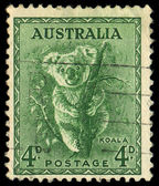 AUSTRALIA - CIRCA 1937: stamp printed by Australia, shows koala, circa 1937 — Stock Photo