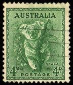 AUSTRALIA - CIRCA 1937: stamp printed by Australia, shows koala, circa 1937 — Stock Photo
