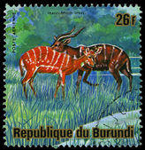 BURUNDI - CIRCA 1975: A stamp printed in Burundi, shows Sitatunga (Tragelaphus spekii), circa 1975 — Photo