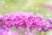 Bright purple flowers, autumn flower design.With copy-space — Stock Photo