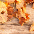 Stock Photo: Autumn Leaves over wooden background