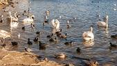 Göl kenarındaki yabani kuşlar — Stok fotoğraf