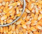 Field Corn — Stock Photo