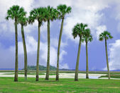 Amelia island, florida — Stock fotografie