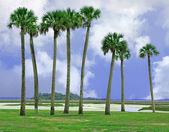 Isla de amelia, florida — Foto de Stock