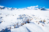 Winter Plants Closed Up On Snowy Mountain — Stock Photo