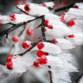 Image of a typical winter frost (tree with snow and ice) — Zdjęcie stockowe