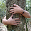 Tree hugging — Stock Photo