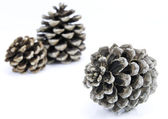 Isolated Pine cones — Stockfoto