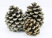 Isolated Pine cones — 图库照片