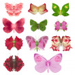 Rose butterfly collection - Stock Photo
