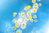 Daisy bokeh glitter breeze — Stock Photo