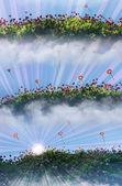 Chrysanthemum flower fields in morning light — Stock Photo