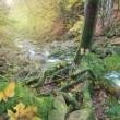 Stock Photo: Autumn Forest Scene by River
