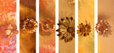 Gilded Flower Buds Banners — Stock Photo