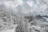 Deer Winter Mountain View — Stock Photo