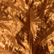 Stock Photo: Gilded Leaf Closeup