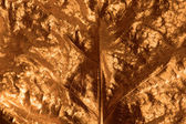 Gilded Leaf Closeup — Stok fotoğraf