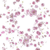 Repeatable Ornamental Sakura Blossom Breeze — Stock fotografie