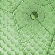 Water Drop on Leaf with Glass Holes — Stock Photo #47738055