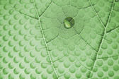 Water Drop on Leaf with Glass Holes — Stock Photo