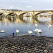 Stock Photo: Swans swimming on river