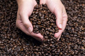 Hands holding coffee beans — Stock Photo