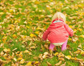 Baby collecting fallen leaves. Rear view — Stock Photo
