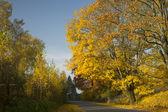 осенняя дорога — Стоковое фото