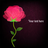Beautiful rose on black background card with a place for your te — Stock Vector