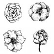 Set of hand drawn vector flowers. — Stock Vector