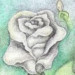 White rose — Foto de Stock