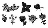 Vector set of hand drawn ink vintage flowers — Stock Vector