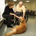 Elderly Man with Woman Petting Dog — Stock Photo #9364310
