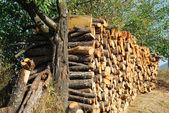Feu de bois empilées chêne — Photo
