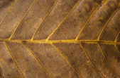 Dry leaf structure — Stock Photo