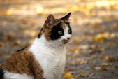Katze im garten — Stockfoto