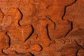 濡れた木の板のクローズ アップ — ストック写真