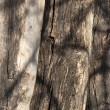 Old wooden beams — Stock Photo