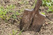 Used shovel stuck in the soil — Stock Photo