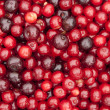 Stock Photo: Sour cherry fruits