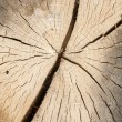 Stock Photo: Oak log surface as background