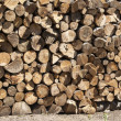 Stacked oak firewood closeup — Stock Photo